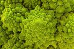 life is a fractal