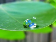 waterdrop on leaf