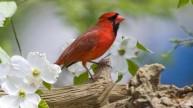 bird -red