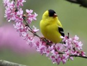 bird -yellow