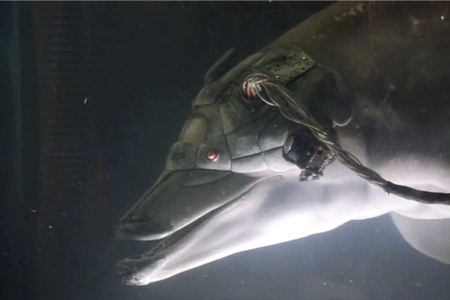 Dolphin in Johnny Mnemonic