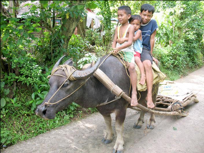 children riding a carabao