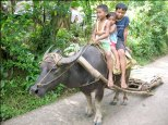 children riding a carabao