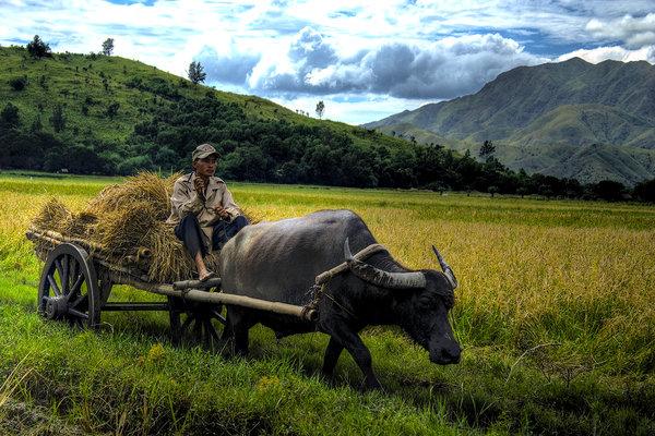 farmer & friend