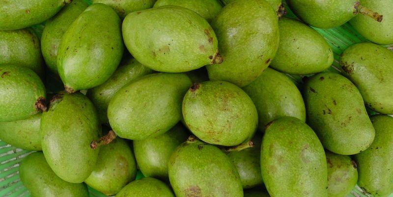 green unripe Philippine mangoes