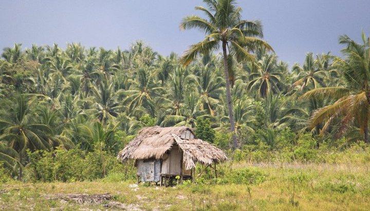 old nipa hut near coconuts