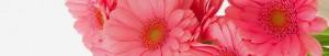 cropped-bouquet-4_.jpg