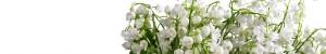 cropped-bouquet-8_.jpg