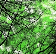 her green sky