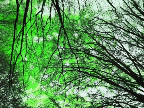 our green sky